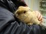 Heimtiere, Kaninchen, Meerschweinchen, Ratten und Co